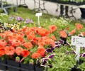 Garden Fair and Plant Sale 2015 Photo Gallery